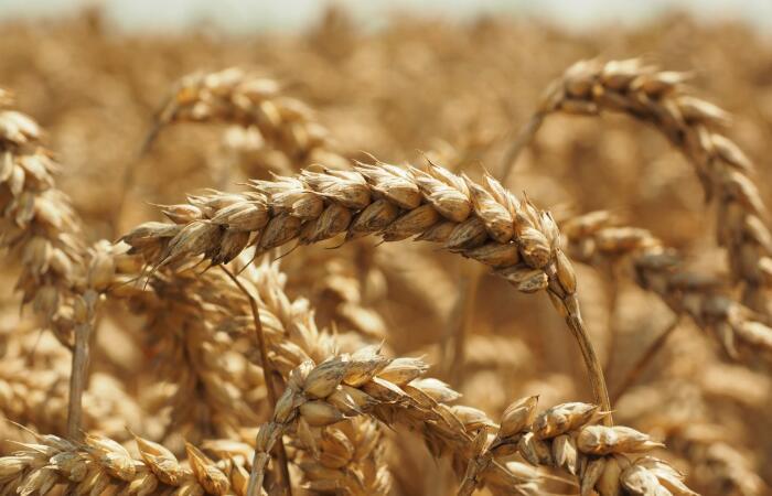 农产品质量所采购实验室仪器 预算420多万