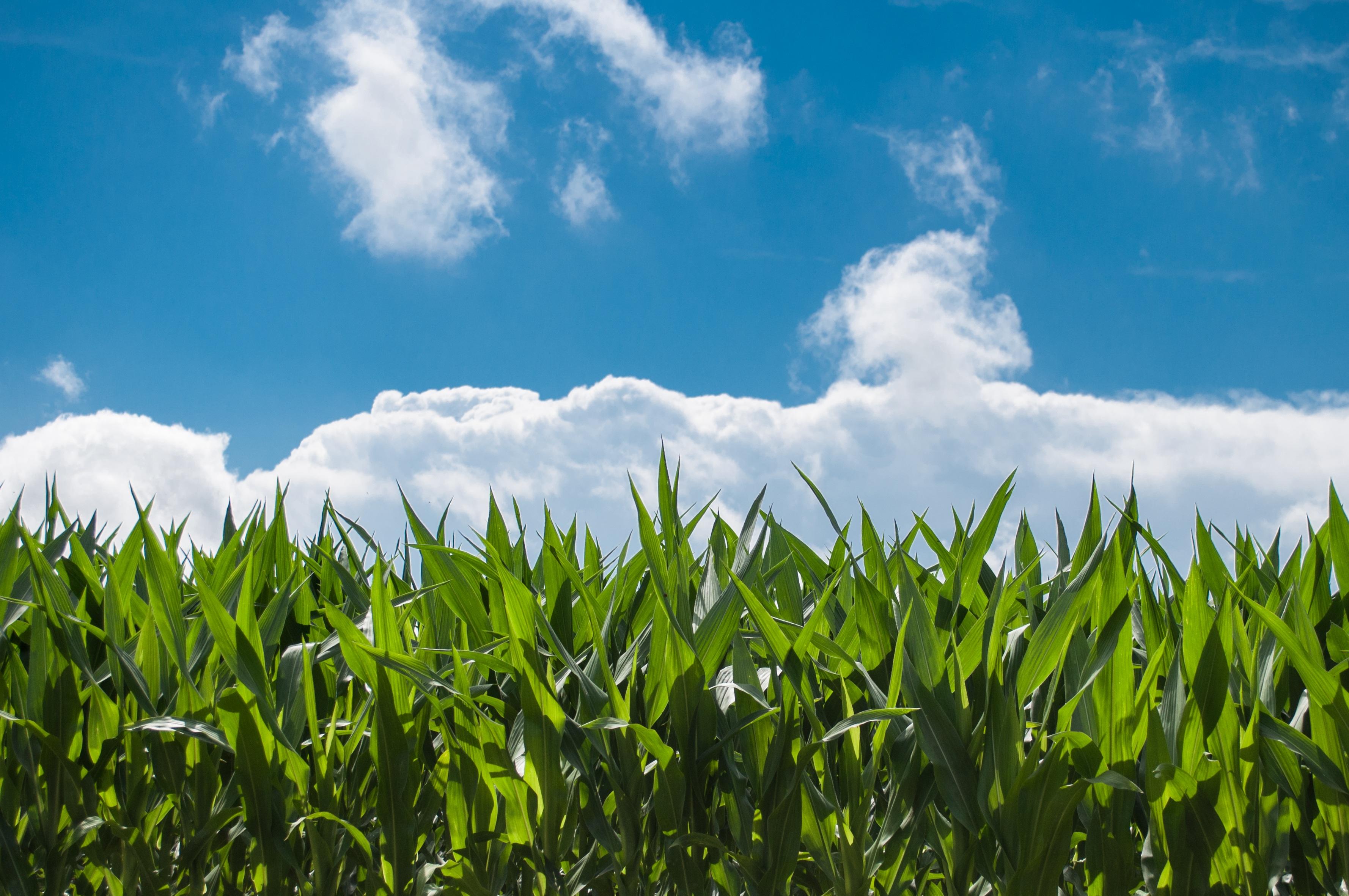 多家中标中科院农业资源研究中心仪器采购项目